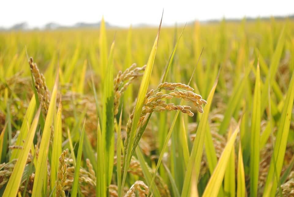 Pengertian Agribisnis Adalah Fungsi, Manfaat dan Contoh